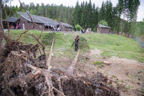 SIKRES: De to trærne som blåste over ende rett ved lekeplassen ble sikret av mannskap fra Hurum eiendomsselskap.