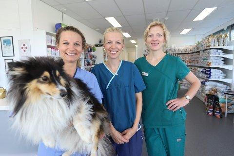 STØRRE: Happy (3) er ofte med sin eier og veterinær Heidi Takle Bye (30) og dyrlegekollegaer Anne-Helene Embu (35) og Christine Rønning Kvam (42) på jobb.