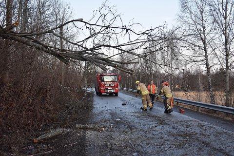 VIND: Et stort tre blåste over veien og hindret trafikken ved Sætre onsdag morgen.
