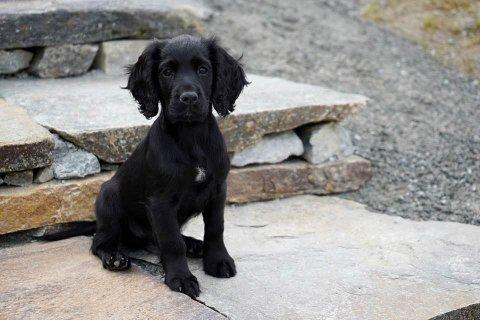 VAKKER LITEN SAK: Lille Luring forsvant fra hundegården i dag.