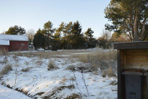 Blant annet Her kan det bli boliger: Det aktuelle området sett fra Rønningveien i sør.Foto: Jan Roaldset