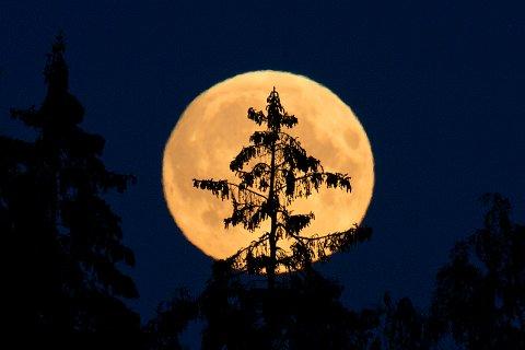 Dette er en supermåne som viste seg ved Bekkestua i Bærum i fjor. Månen som skal vise seg den 14. november vil bli enda større.  Foto: Jon Olav Nesvold / NTB scanpix