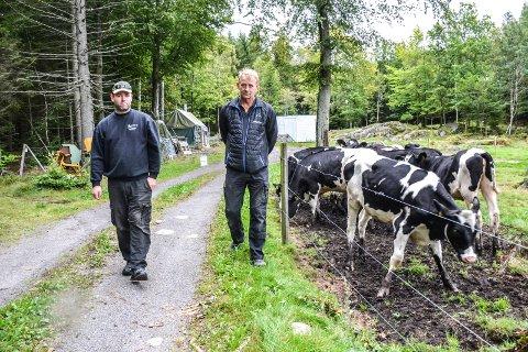 SLUPPET UT: Fire kviger forsvant i to dager, etter at noen hadde åpnet portene på beitet. Gårdeier er Trond Clausen (t.v.), og kvigene tilhører Christian Enge Hansen.