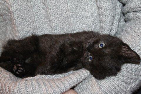 FORLATT: Dette er en av kattungene som ble funnet forlatt i Sandefjord.