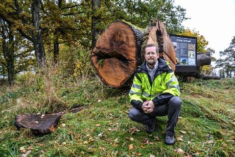 ORELUND: Stammen på ei eik som blåste ned i Orelund er tatt vare på, etter initiativ fra miljøvernrådgiver Pål Abrahamsen i Sandefjord kommune.