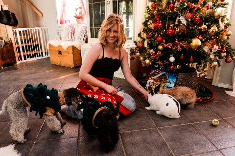 ADVENTSTID: Det er jul i stua og bare dager igjen til adventskalenderne skal åpnes. Dvergpuddelen Susanne (fra venstre), toypuddelen Helene, matmor Victoria Eigestad og kaninene Albert og Sofie gleder seg til jul.