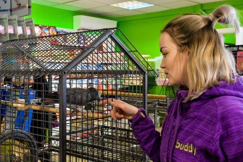 KJENDIS: Lollo er en kjendis blant dyrebutikkens kunder og har vært fast innventar siden 1992. Her er det butikkmedarbeider Malin Valen Karlsen som pusler litt med henne.