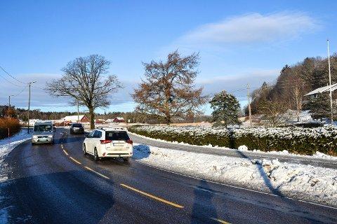 DRONNINGA: Nytt boligfelt kalt Dronninga ved fylkesvei 303 på Freberg. Eika til venstre i bildet er verneverdig og gjør at inn- og utkjøring til de 15-20 boligene må flyttes. Det betyr at 1,2 mål dyrka mark må ofres.
