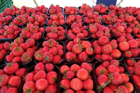 PÅ HELL: Jordbærsesongen i Sør-Norge er ferdig flere steder, to uker tidligere enn vanlig.