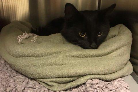 VIL HJEM: Katten slapp av unna påkjørselen med kun noen småskader, men den savner hjemmet sitt.