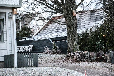 VERNET VED LOV: Denne eika i Frederik Stangs gate i Stokke har en omkrets på 235 centimeter og omfattes dermed av vern etter naturmangfoldloven, der grensen går ved 200 centimeter.