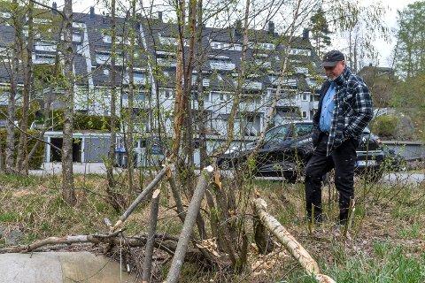 UTSIKT: En bever har påtatt seg ansvaret for å trimme vegetasjonen rundt Haslebekken. Bjørn Bergseth er stadig på utkikk, men har ikke sett snurten av gnageren så langt.