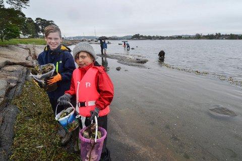 DUGNAd: Lørdag arrangerte Store Bergan Nærmiljøutvalg dugnad for å plukke stillehavsøsters på Granholmen. Ludvig (10) og Adele (7) var ivrige plukkere, og samlet tre bøtter på kort tid.