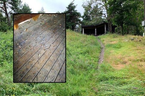 LILLE BRISKE: Mange har glede av denne plassen i Framnesskogen, men ikke alle er like flinke til å rydde etter seg.