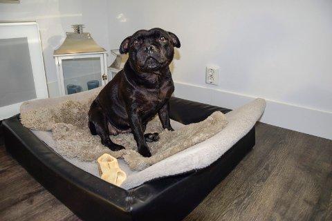 HUNDEHOLD I RETTEN: Kan hunden Shaci (10) bli boende i Stub borettslag eller ikke? Det er stridens kjerne under ukens ankeforhandling i Agder lagmannsrett.