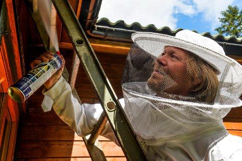 VEPSEBOL: Hans Petter Schelbred fra Maurex AS er stadig ute på oppdrag for å fjerne vepsebol. I år regner han med at det blir mange som trenger hans bistand til å fjerne bol på en sikker og trygg måte.