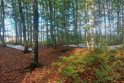 DUMPET SØPPEL: Dette synes møtte Mikal Bell på en av sine vante turer gjennom skogen på Fokserød. Nå ønsker han at noen rydder opp og finner de ansvarlige.