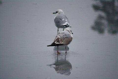 SIKKER IS: Både mennesker og fugler kan med trygghet ta på seg skøytene på tre vann i Sandnes. Bildet er tatt forrige vinter.