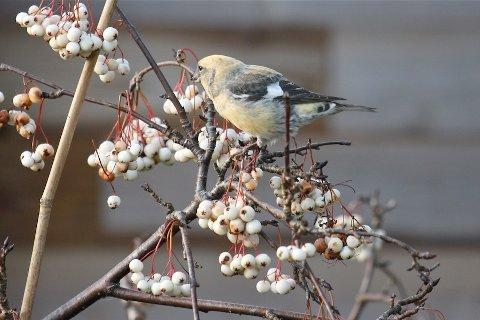 FUGL: Hvilken fugl er dette?