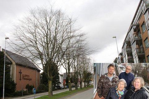 KLIPPES: Flere av trærne i Oalsgata ble klippet torsdag kveld. Fredag kveld skal enda mer klippes. Innfelt er beboerne Sindre Riska, Oddvar Thomassen, Synnøve Bøe og Karen Helene Thomassen i Byhagen.