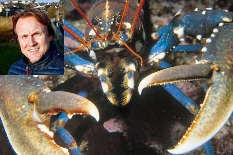 HUMMER: Gruppeleder Erlend Kristensen i MDG Sandnes, vil at det skal opprettes fredningsområder for fiske av hummer i Sandnes.