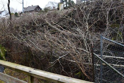 SKJEMMENDE: Flere steder langs jernbanelinjen inntil Sandvedparken er det nå hogst som ikke har blitt ryddet opp.
