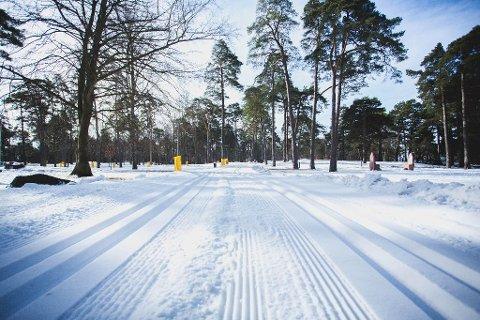 SKIFØRE: Flere steder i fylket er det godt skiføre. I Kulåsparken i Sarpsborg har det den siste tiden vært gode forhold.