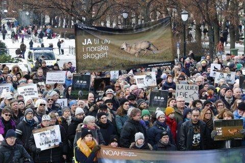 Mange møtte opp foran Stortinget for å demonstrere for å bevare ulv og andre rovdyr i Norge lørdag.