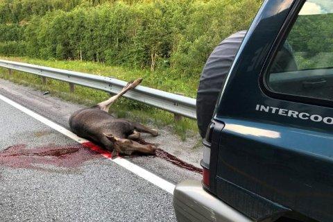 SMERTEFULL DØD: Dyrene lider en smertefull død når sjåføren ikke melder fra om påkjørselsen.