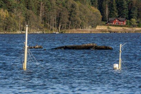 VRAK: Ny ordning fra Sarpsborg kommune om hvordan du kan bli kvitt din gamle småbåt uten at du forlater den og stikker fra problemet. I fjor skrev SA om skøyta «Sonate» som hadde ligget på bunnen av Grimsøykilen like utenfor Grimsøy Båthavn siden 2019.