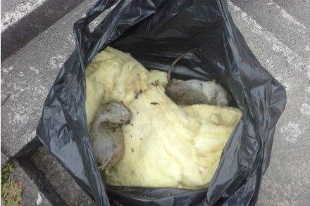 Sjekk om det er spor etter rotter og mus før du kjøper bolig.