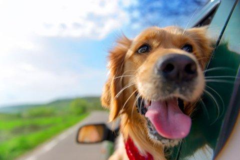 En oppdatering av de til enhver tid gjeldende innførselsregler for hund til Norge finner du på Mattilsynets nettside.