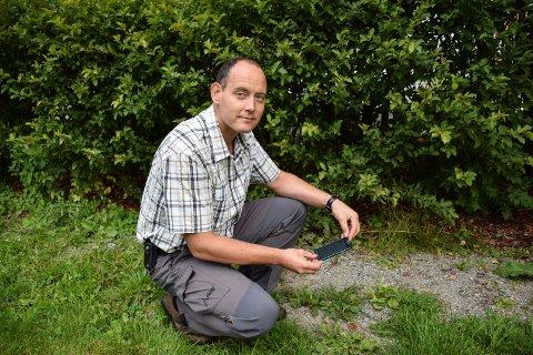 - Det kan godt hende det er flere valper enn de to som nå er påvist, sier skogbrukssjef i Landbrukskontoret HSA, Vidar Aarnes.