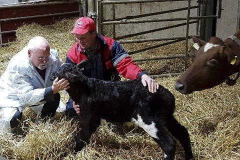Nyfødt: Da biskop Atle Sommerfeldt besøkte Einar Kiserud, hadde han bursdag. Kalven som ble født samme dag, ble dermed døpt Atle. Foto: Katharina Kirkerød