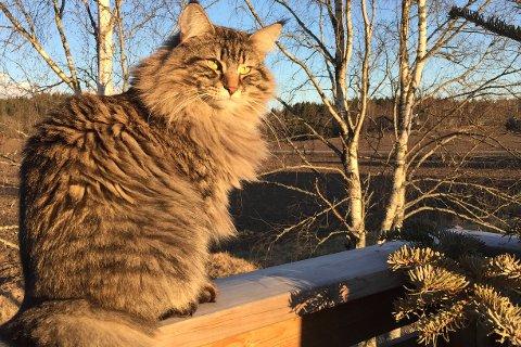 BORTE: Katten Zonya har vært borte fra sitt hjem på Knapstad en lengre periode.