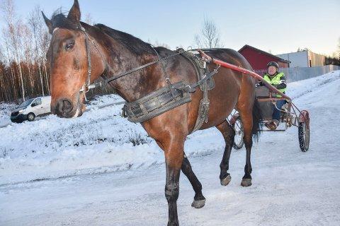 Hyggeturer: Flere dager i uka er Anne K. Lindeman (76) og hesten «Lillegutt» på Vammalinna. Flere politikere vil forby bruk av hest og vogn på strekningen.