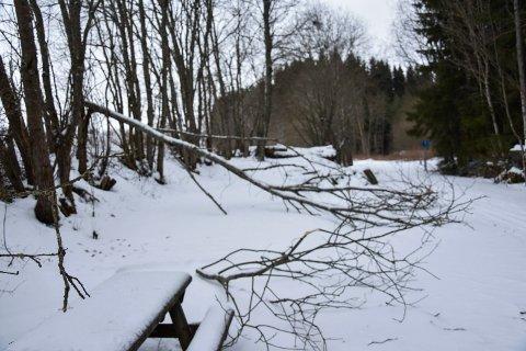 Knekte trær: Ved Tømt har vinden herjet på et par av trærne.
