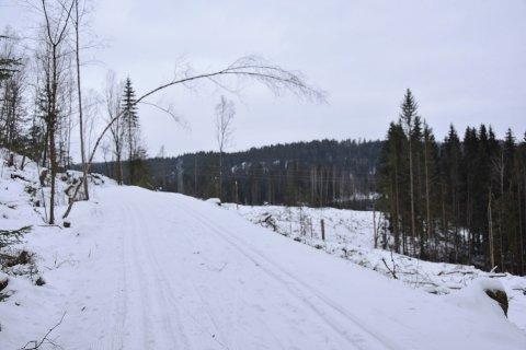 Ryddet: Forrige uke falt trær over skisporet på Solbergfosslinna.