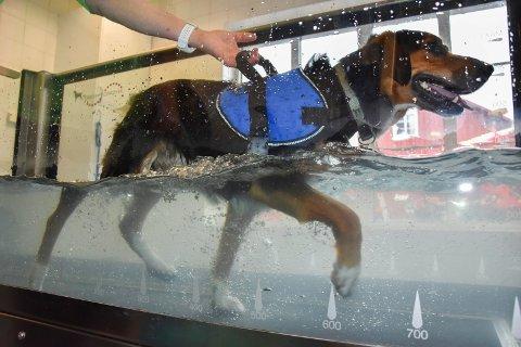 Vanntredemølle: Siste nytt for å trene hund er denne vanntredemøllen som hunden Lucas bruker.