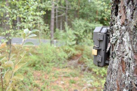 Ulovlig kamera: Dette kameraet er satt opp ikke langt fra fylkesveien ved Mørk Golfbane. Viltkameraet er ikke merket av hvem som har satt det opp og hensikten med det.