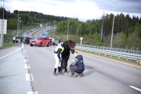 Veterinær Jeanette Skjenneberg (t.h.) i Trøgstad Dyreklinikk konstaterer at hesten har hatt engelvakt.