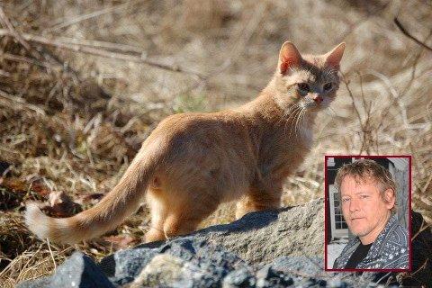 PÅKJØRT: Ronny Høitomt fant katten sin, Emil, død i grøftekanten.