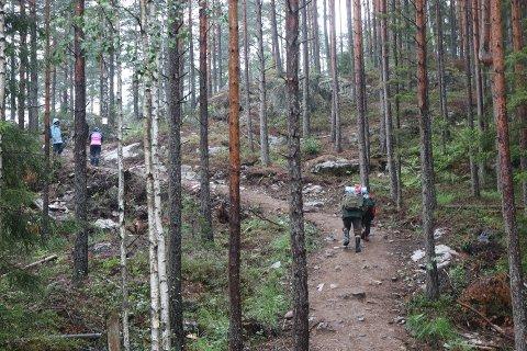 STI-KRITIKK: Nyvalgt leder for Naturvernforbundet i Indre Østfold, Halvor Hartvig, er meget kritisk til hvordan den nye stien opp til Linnekleppen er utformet. Her er folk på vei opp den siste biten til konserten forrige helg.