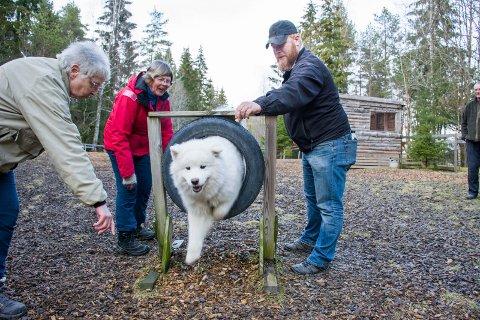 PRØVD ALLE TRIKSENE I BOKA: Liv Andresen driver Solbergfoss hundepark. Her er hun sammen med Ingar Garberg, Ole Martin Lillevold og hunden Baijas.