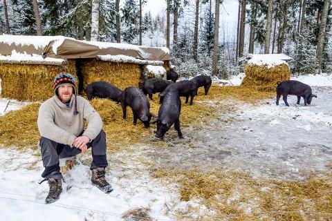Flokken av unggriser trippet fornøyd rundt utenfor halmfjøset, etter at matfar Espen Thunshelle Ringstad og en mann med kamera kom og forstyrret hvilestunden deres.
