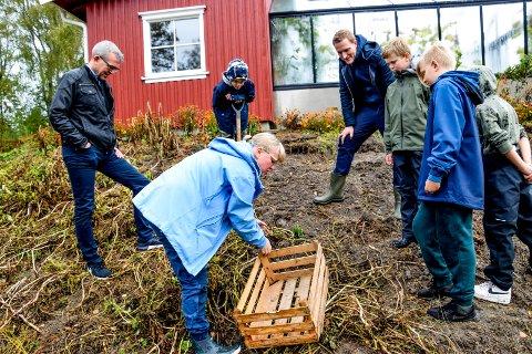 Både rektor, formidler og elever fulgte med da lærer Kari Mette Heller skulle sette den første gruppen i gang med å ta opp poteter.