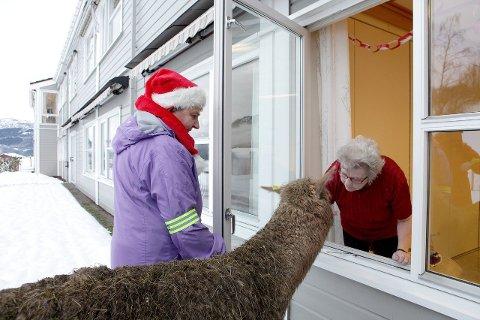 BESØK: Rønnaug Rusten fekk storfint besøk av dei sosiale alpakkaane. (Foto: Anders Huke)