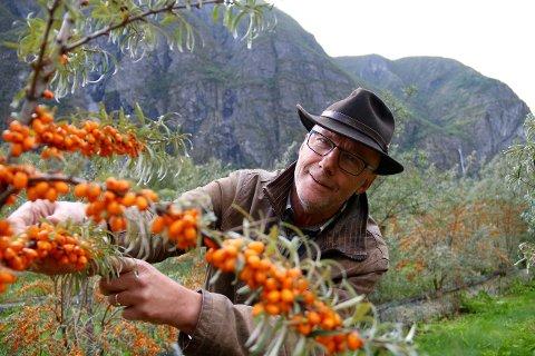 STØRST I LANDET: Marco Neven er innehavar av det største produksjonsfeltet av tindved i Noreg i dag. Feltet han dyrkar på Ljøsne utgjer om lag 90 prosent av den samla norske produksjonen. Også i Fresvik hjå Siri Bøthun veks det tindved. (Arkivfoto)