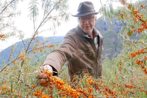 TOK SJANSEN: Marco Neven var mellom dei få produsentane som tende på ideen om å dyrka tindved. No ligg han og Lærdal Grønt godt an til å få matbransjens Oscar for innsatsen. (Foto: Hanne Stedje)