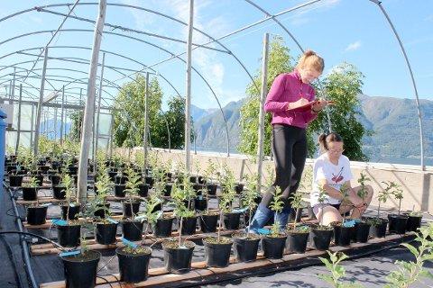 PROSJEKT: Testing av komposten er blitt utført av Njøs næringsutvikling., her ved f.v. Anete Busa og Monika Wojtovicz. (Foto: Liv Hatleli Gilpin)